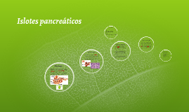 Copy of Islotes pancreáticos