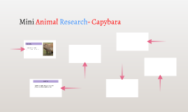 Mini Animal Research- Capybara