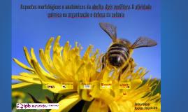 Aspectos morfológicos e anatómicos da abelha Apis mellifera.