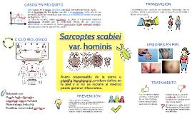 Sarcoptes scabiei var. hominis