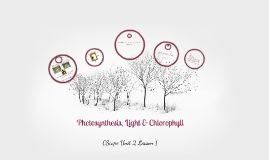 Photosynthesis, Light, & Chlorophyll