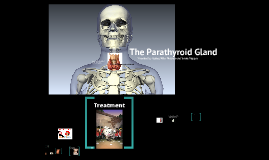 Endocrine System: Parathyroid Gland