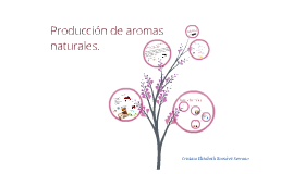 Copy of producción de aromas naturales