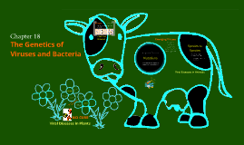 Genetics of Viruses and Bacteria - Featuring a Mad Cow!