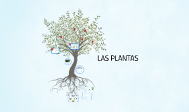 Copy of LAS PLANTAS