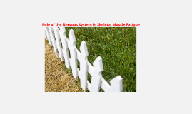 Role of the Nervous System in Skeletal Muscle Fatigue