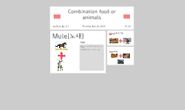 Combination food or animals