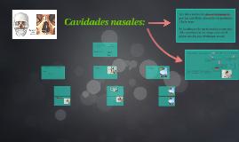 Cavidades nasales