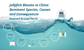 Jellyfish Blooms in China: