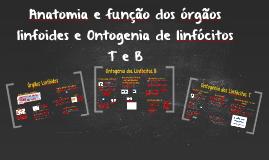 Anatomia e função dos órgãos linfoides e Ontogenia de linfóc