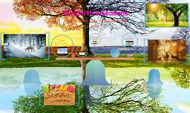 The Earth's Seasons