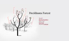 Copy of Deciduous Forest