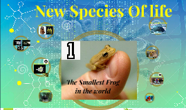 Copy of The Smallest Frog in the world