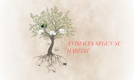 Copy of ANIMALES HERMOSOS