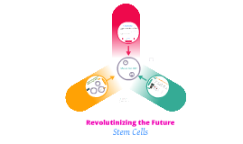 support stem cell research essay