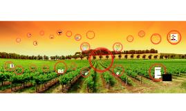 Copy of Wines of Spain
