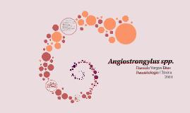Angiostrongylus spp.