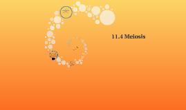 11.4 Meiosis