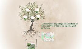 La importancia de proteger los humedales, es la de preserva