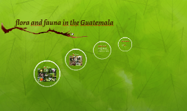 flora and fauna in the Guatemala