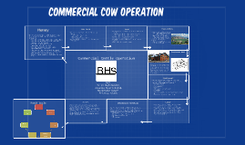 Commercial cow operation