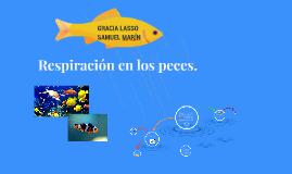 Copy of Respiración en los peces.