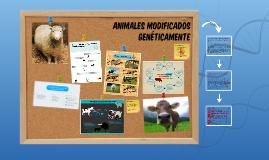 ANIMALES MODIFICADOS GENÉTICAMENTE
