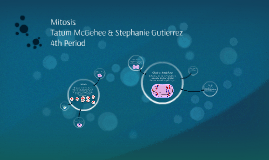 4th/Tatum McGehee, Stephanie Gutierrez/ Mitosis