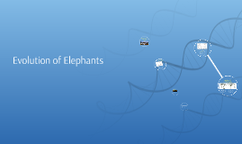 Evolution of Elephants
