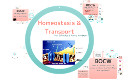 Focus 6: Homeostasis & Transport
