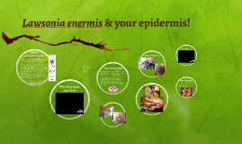 Lawsonia enermis & your epidermis!