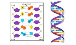 La importancia del ADN en la síntesis de proteínas y alterac