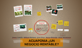 Copy of ACUAPONIA ¿UN NEGOCIO RENTABLE?