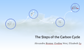 The Steps of the Carbon Cycle