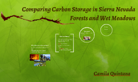 Copy of Comparing Carbon Storage in Sierra Nevada Forests and Wet Me