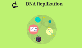 DNA Replikation