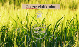 Oocyte vitrification