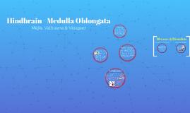 Hindbrain - Medulla Oblongata