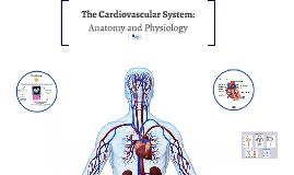 The Cardiovascular System: