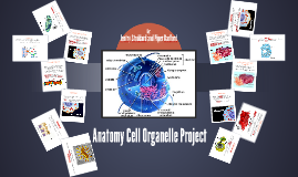Anatomy Cell Organelle Project