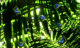 Der Morpho-Schmetterling