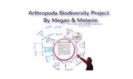 Arthropoda Presentation