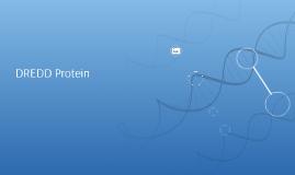 DREDD Protein