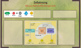Copy of Zellatmung by LLars, Yannik, Malte, Simoms und ...