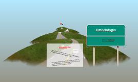 Copy of Proceso de fecundacion