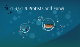 21.3/21.4 Protists and Fungi