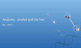 Anatomy - alcohol and the liver