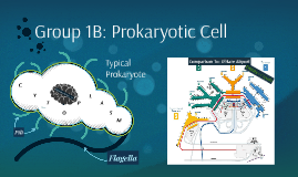 Group 1B: Prokaryotic Cell