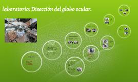 laboratorio: Disección del globo ocular.