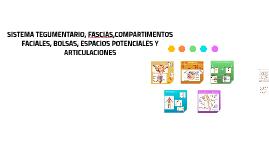 SISTEMA TEGUMENTARIO, FASCIAS,COMPARTIMENTOS FACIALES, BOLSA